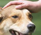 Salute e benessere dei nostri animali