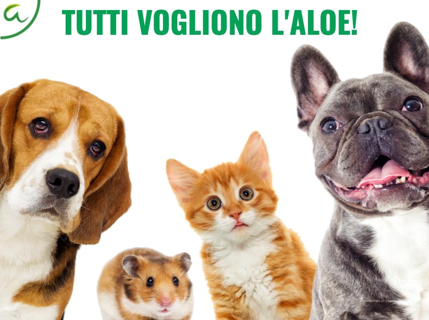 Succoaloevera - Forever Living - Benessere degli animali