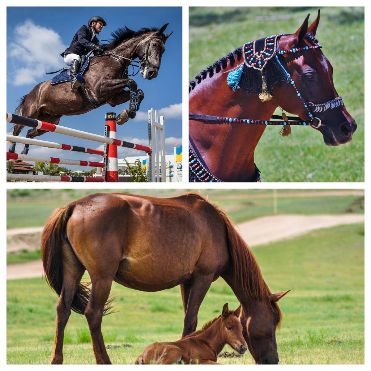 Cavalli, Benessere Cavallo, cavalli da corsa, cavalli da esposizione, aloe vera
