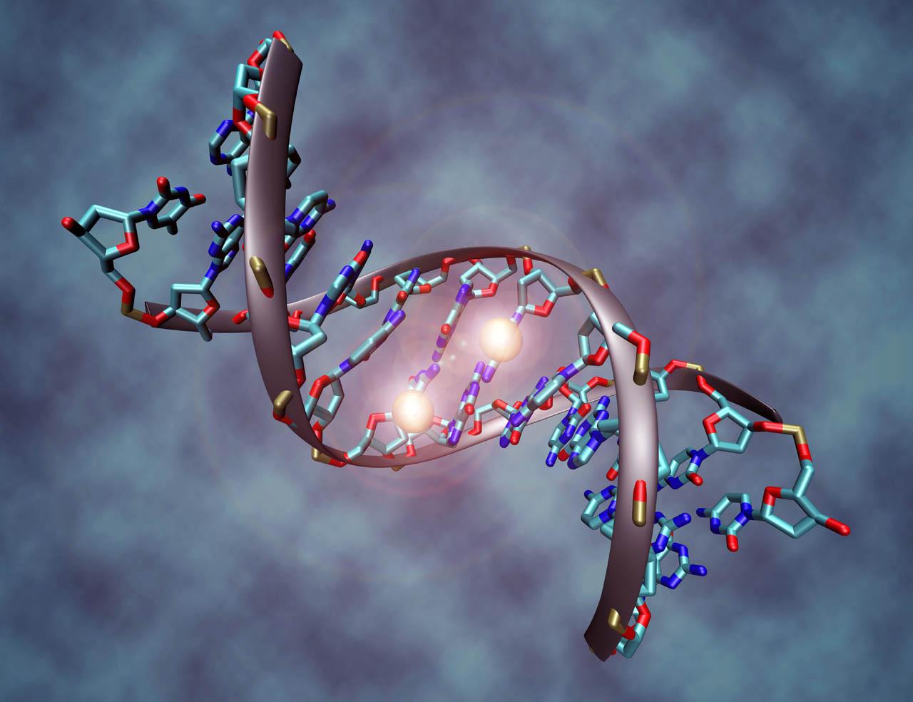 Nuovo studio scientifico sugli effetti positivi della meditazione sulla regolazione genica